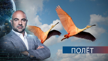 """Крылья. """"Как устроен мир"""" с Тимофеем Баженовым. 16.09.2020"""