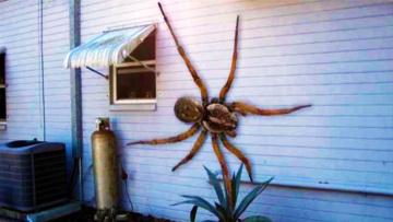 Топ 10 самых больших насекомых в мире
