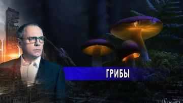Грибы: таинственная цивилизация.  Самые шокирующие гипотезы с Игорем Прокопенко (18.06.2021)