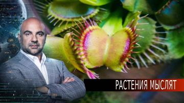 """Растения мыслят. «Как устроен мир"""" с Тимофеем Баженовым (26.08.2020)"""