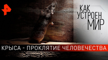 """Крыса - проклятие человечества. """"Как устроен мир"""" с Тимофеем Баженовым (31.10.2019)"""