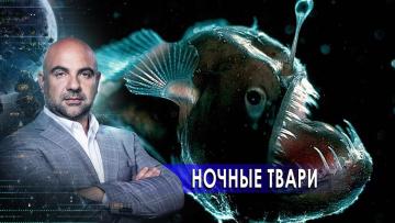 """Ночные твари. «Как устроен мир"""" с Тимофеем Баженовым (15.02.2021)"""