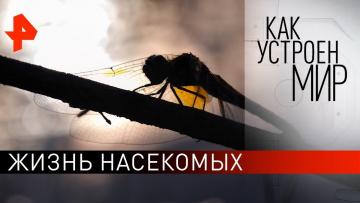 """Жизнь насекомых. """"Как устроен мир"""" с Тимофеем Баженовым (29.07.2021)"""