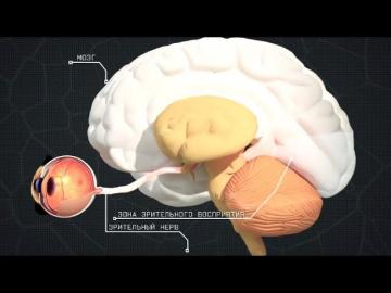 Тайны анатомии. Органы чувств. Фильм первый