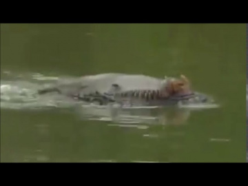 Жуткое существо в одной из рек Брунея